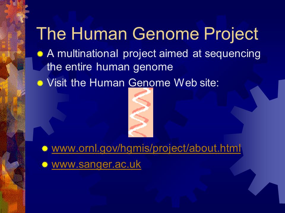 The Human Genome Project A multinational project aimed at sequencing the entire human genome Visit the Human Genome Web site: www.ornl.gov/hgmis/project/about.html www.sanger.ac.uk
