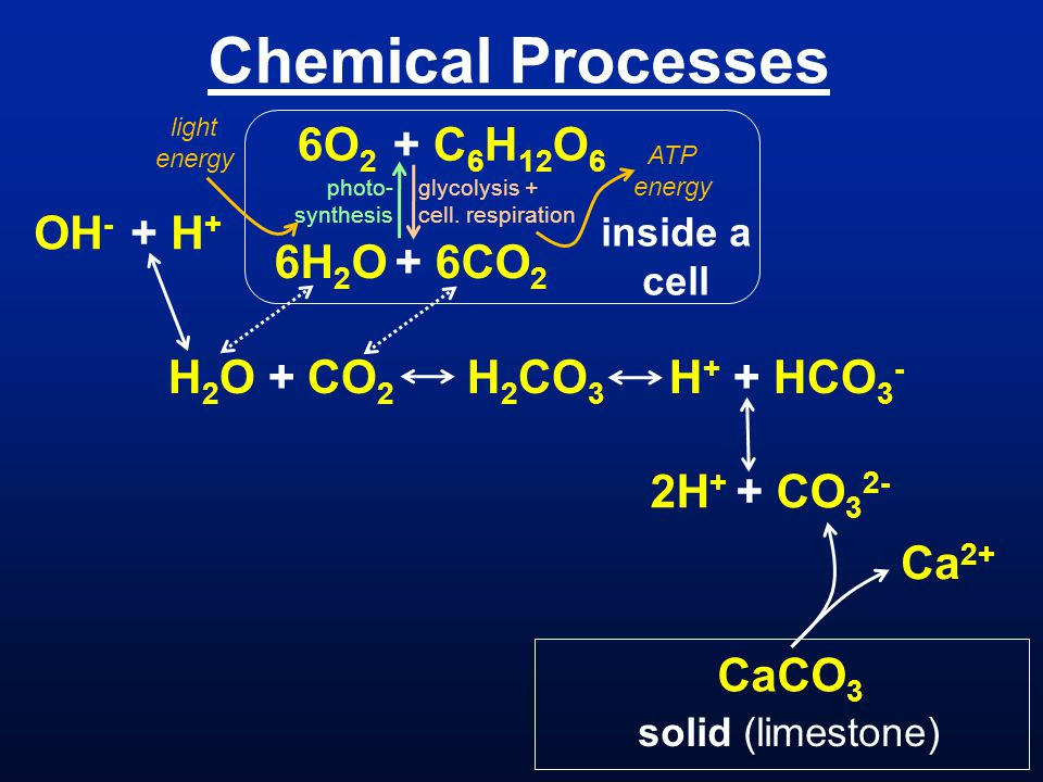Chemical Processes H 2 O + CO 2 H 2 CO 3 H + + HCO 3 - OH - + H + 2H + + CO 3 2- CaCO 3 solid (limestone) Ca 2+ photo- synthesis 6O 2 + C 6 H 12 O 6 g