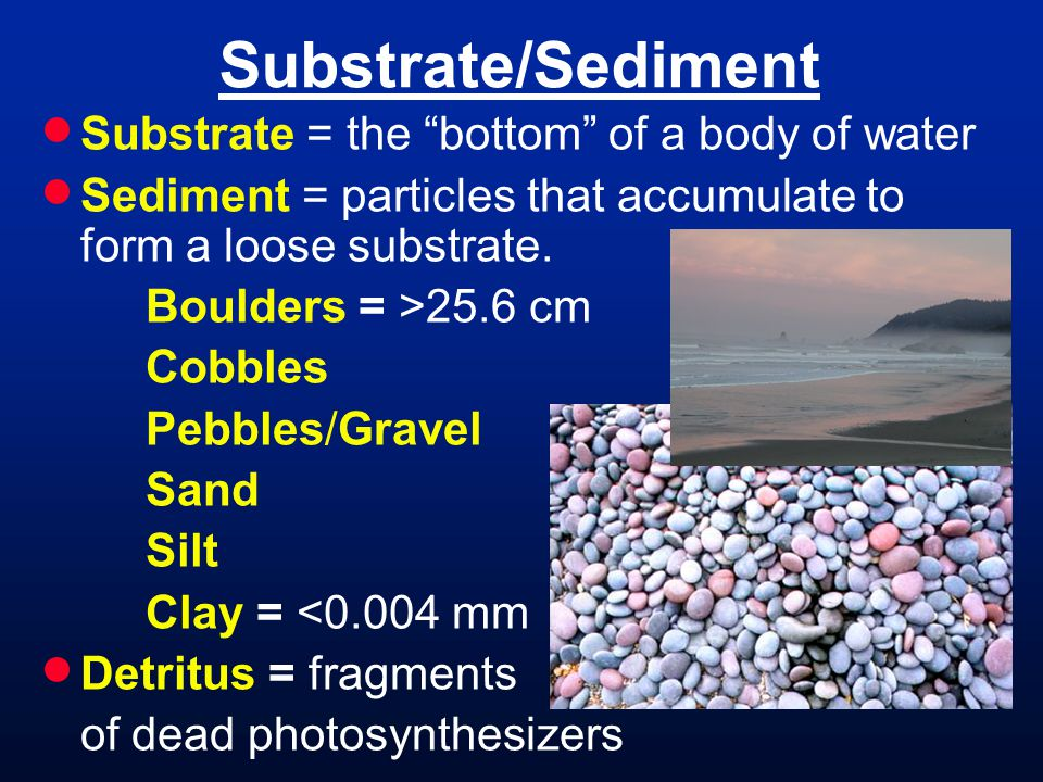 Substrate/Sediment Substrate = the bottom of a body of water Sediment = particles that accumulate to form a loose substrate.