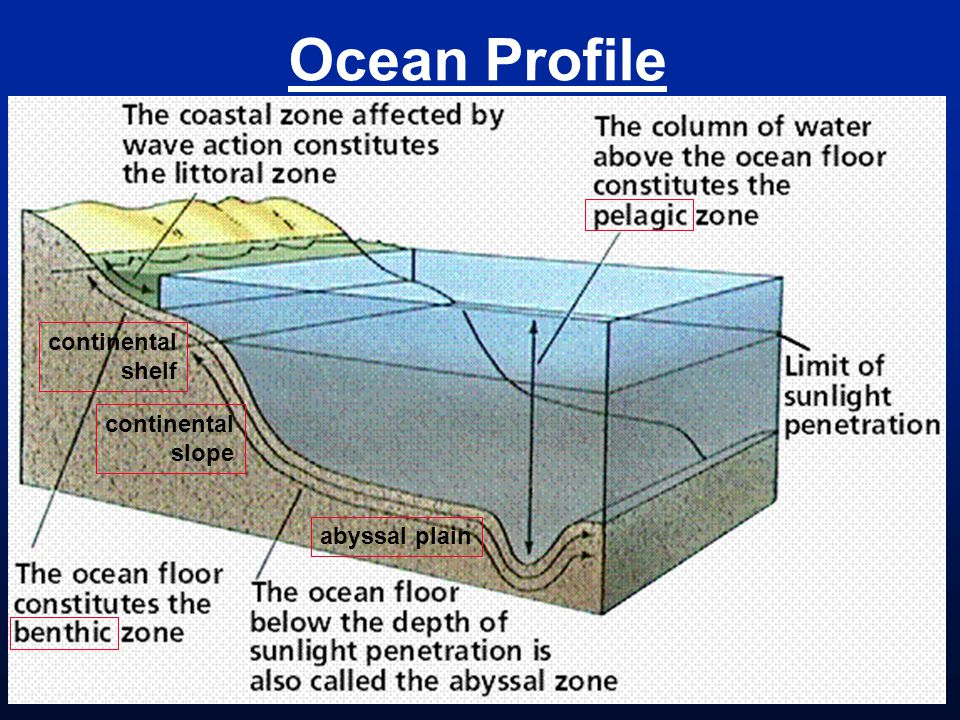 Ocean Profile continental shelf continental slope abyssal plain
