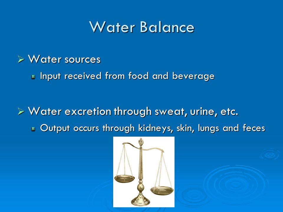 Water Balance Water sources Water sources Input received from food and beverage Water excretion through sweat, urine, etc.