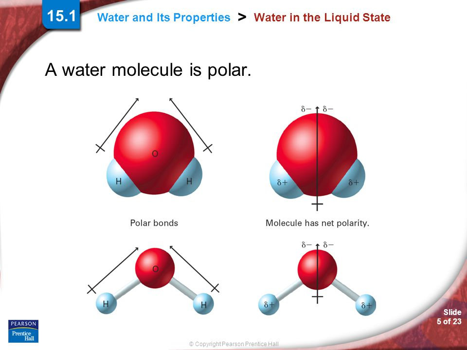 Slide 5 of 23 © Copyright Pearson Prentice Hall Water and Its Properties > Water in the Liquid State A water molecule is polar. 15.1