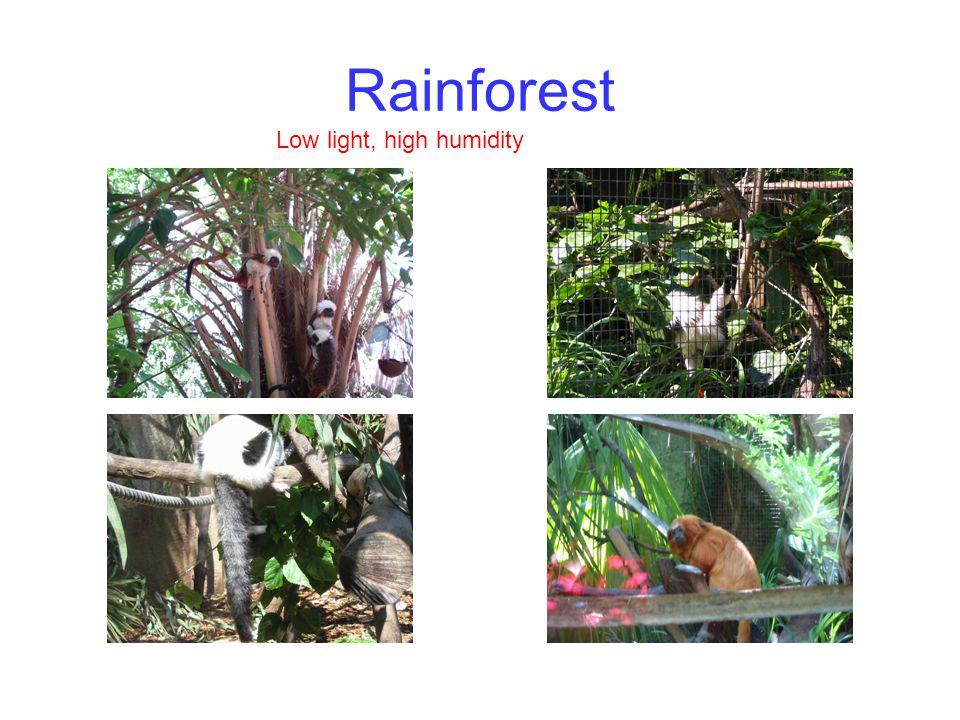 Rainforest Low light, high humidity