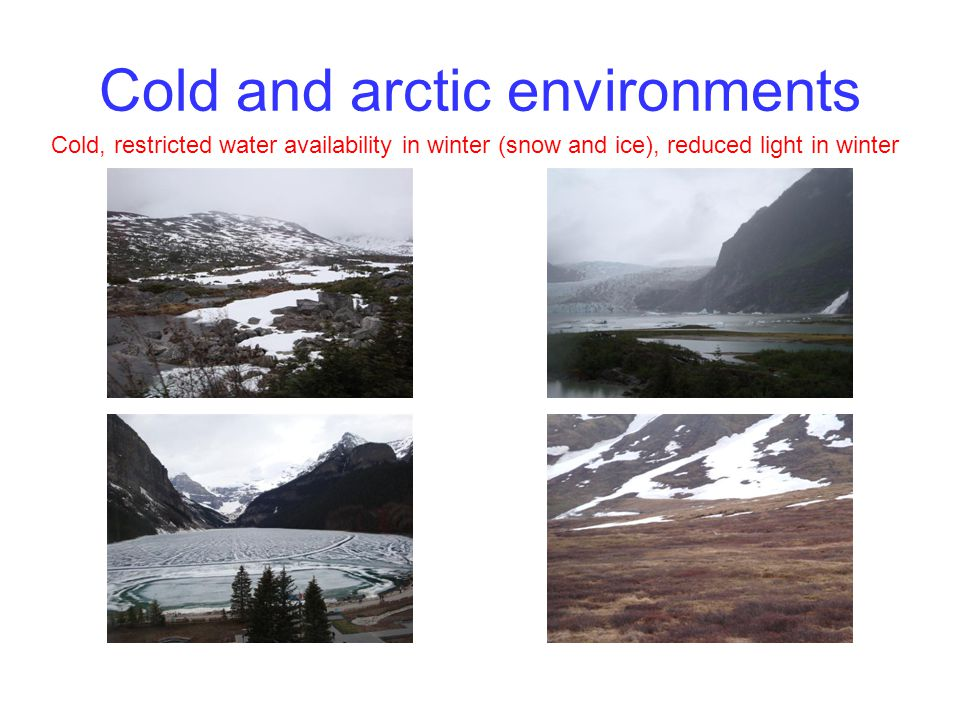 Cold and arctic environments Cold, restricted water availability in winter (snow and ice), reduced light in winter