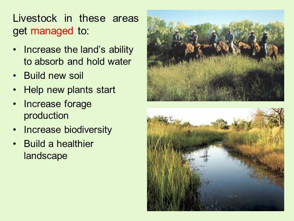 Livestock in these areas get managed to: Increase the lands ability to absorb and hold water Build new soil Help new plants start Increase forage production Increase biodiversity Build a healthier landscape