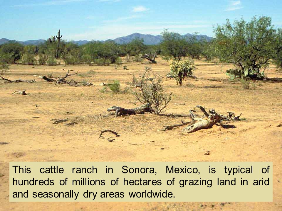 This cattle ranch in Sonora, Mexico, is typical of hundreds of millions of hectares of grazing land in arid and seasonally dry areas worldwide.