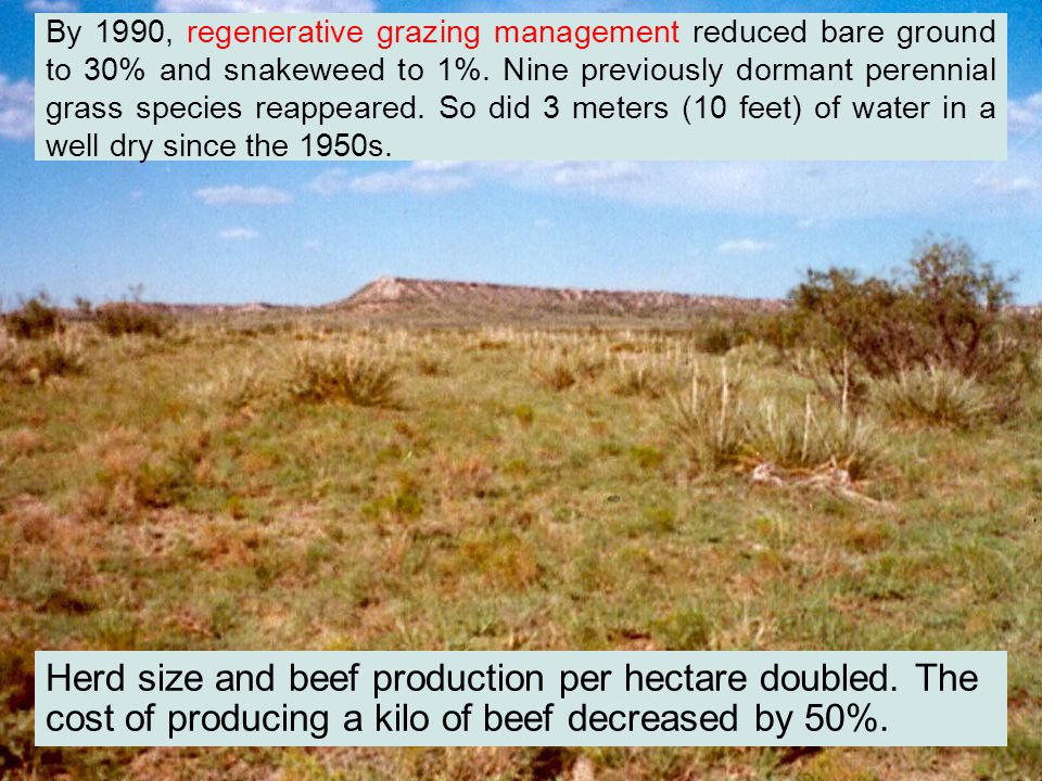 By 1990, regenerative grazing management reduced bare ground to 30% and snakeweed to 1%.