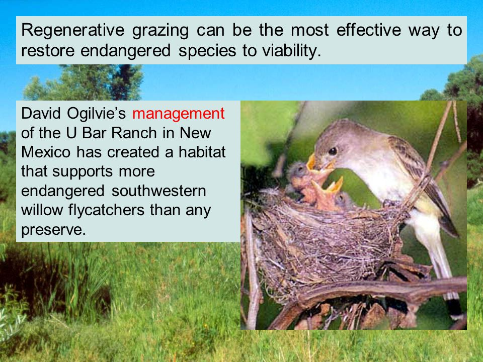 David Ogilvies management of the U Bar Ranch in New Mexico has created a habitat that supports more endangered southwestern willow flycatchers than any preserve.