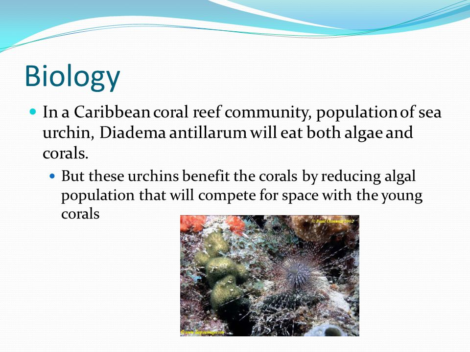 Biology In a Caribbean coral reef community, population of sea urchin, Diadema antillarum will eat both algae and corals.