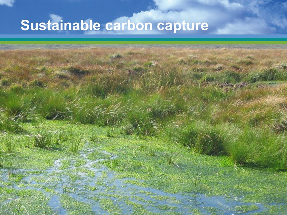 Sustainable carbon capture