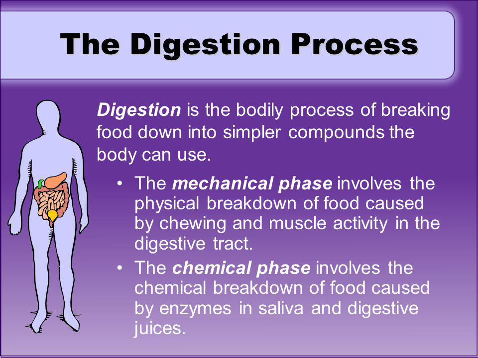 The Digestion Process Digestion is the bodily process of breaking food down into simpler compounds the body can use. The mechanical phase involves the