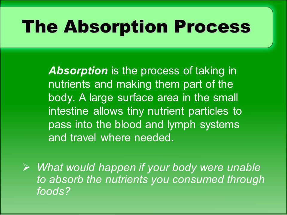 The Absorption Process Absorption is the process of taking in nutrients and making them part of the body. A large surface area in the small intestine