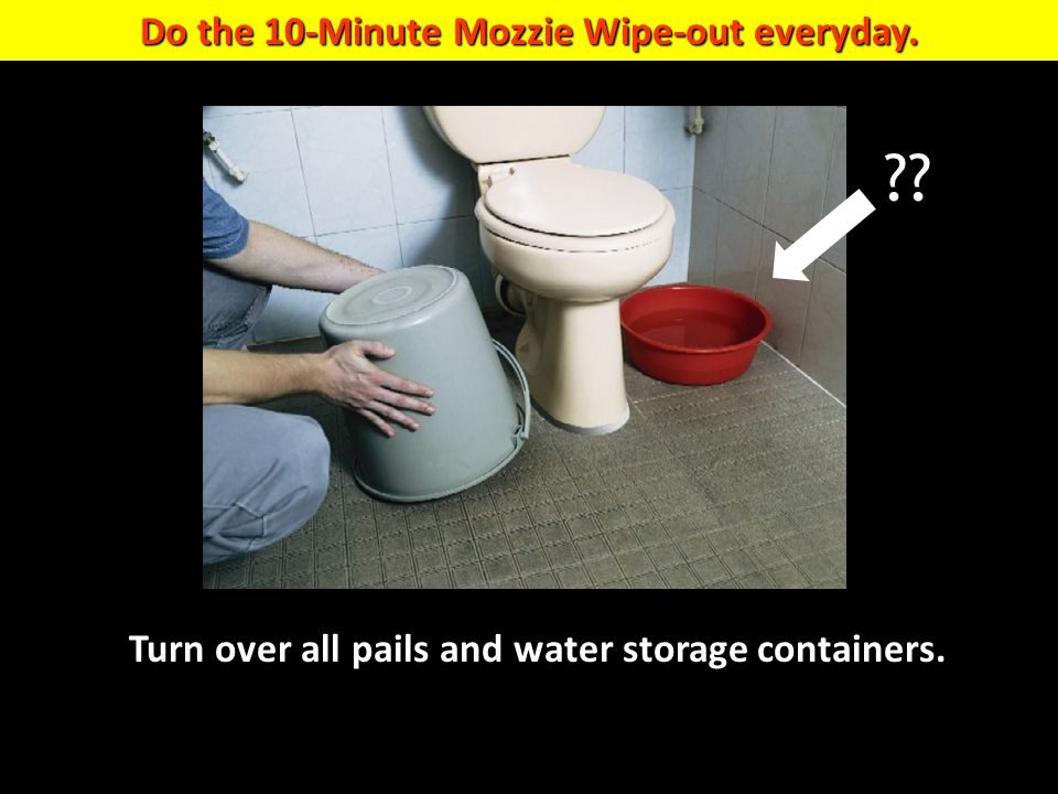 Do the 10-Minute Mozzie Wipe-out everyday. Turn over all pails and water storage containers. ??