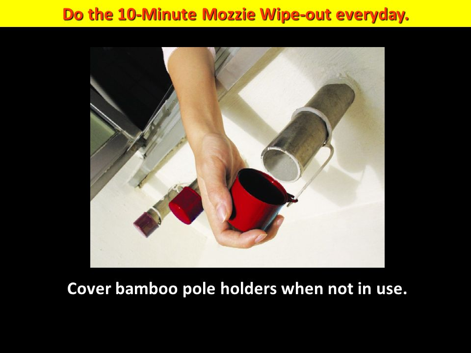 Do the 10-Minute Mozzie Wipe-out everyday. Cover bamboo pole holders when not in use.