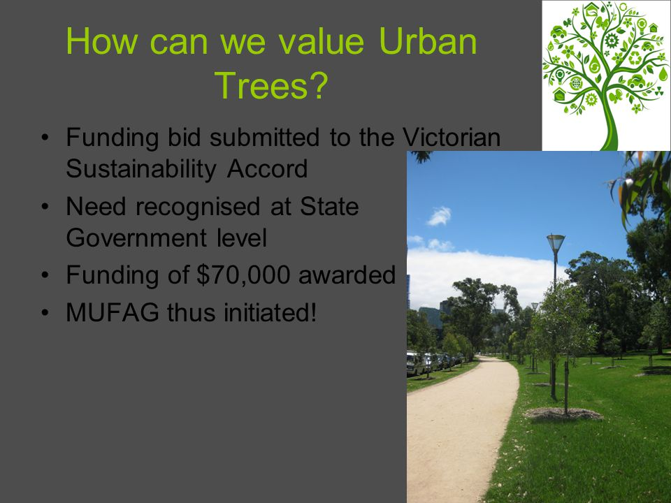 How can we value Urban Trees.