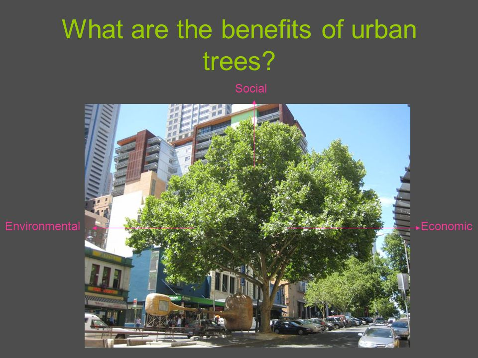 What are the benefits of urban trees Environmental Social Economic
