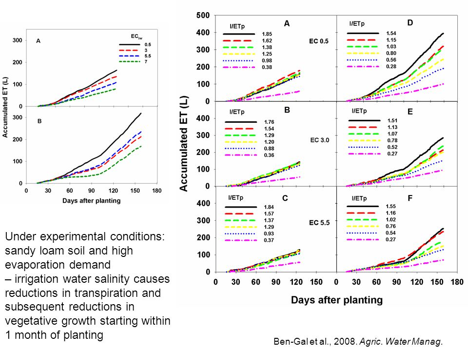 Under experimental conditions: sandy loam soil and high evaporation demand – irrigation water salinity causes reductions in transpiration and subsequent reductions in vegetative growth starting within 1 month of planting Ben-Gal et al., 2008.