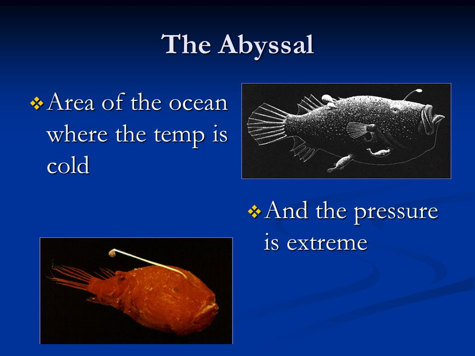 The Abyssal Area of the ocean where the temp is cold Area of the ocean where the temp is cold And the pressure is extreme