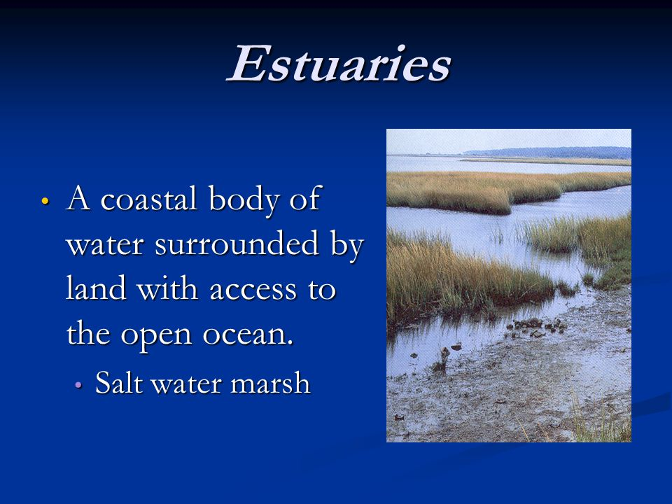 Estuaries Fed by fresh water rivers and streams.Fed by fresh water rivers and streams.