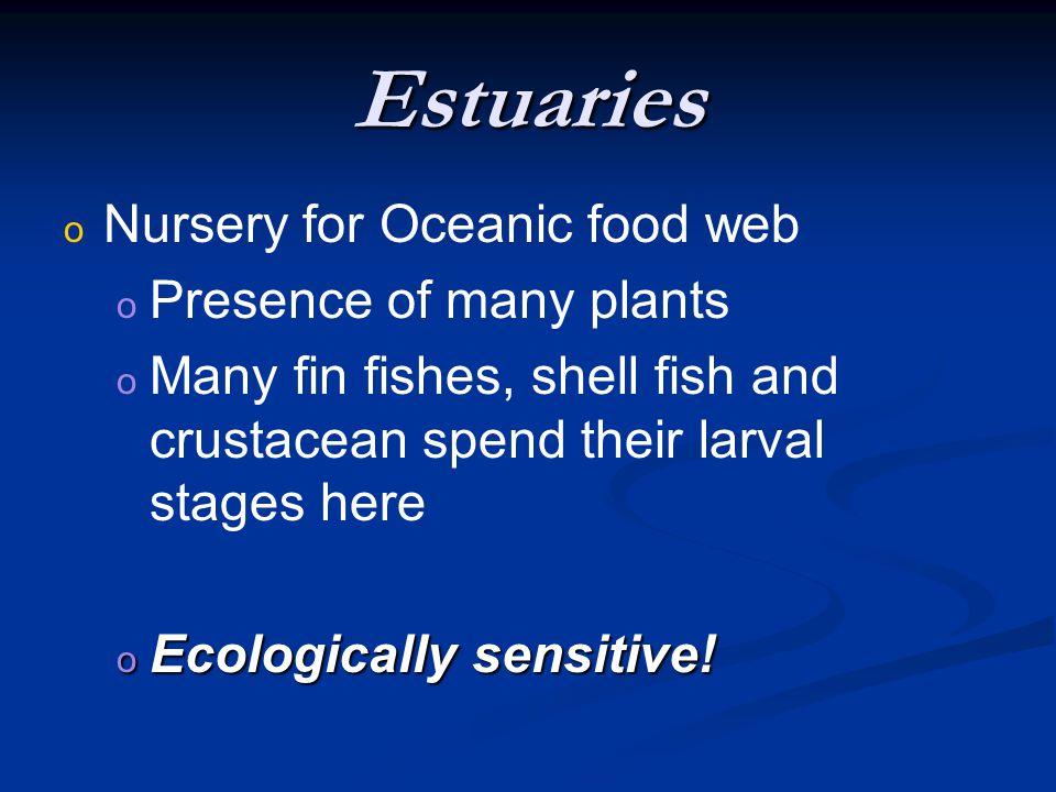 Estuaries o Mangrove o (tropical equivalent to estuaries) o 70% of coast line o Root systems assist in o Preventing erosion o Provide a barrier against storms