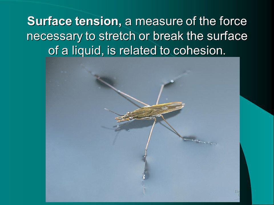 Surface tension, a measure of the force necessary to stretch or break the surface of a liquid, is related to cohesion.