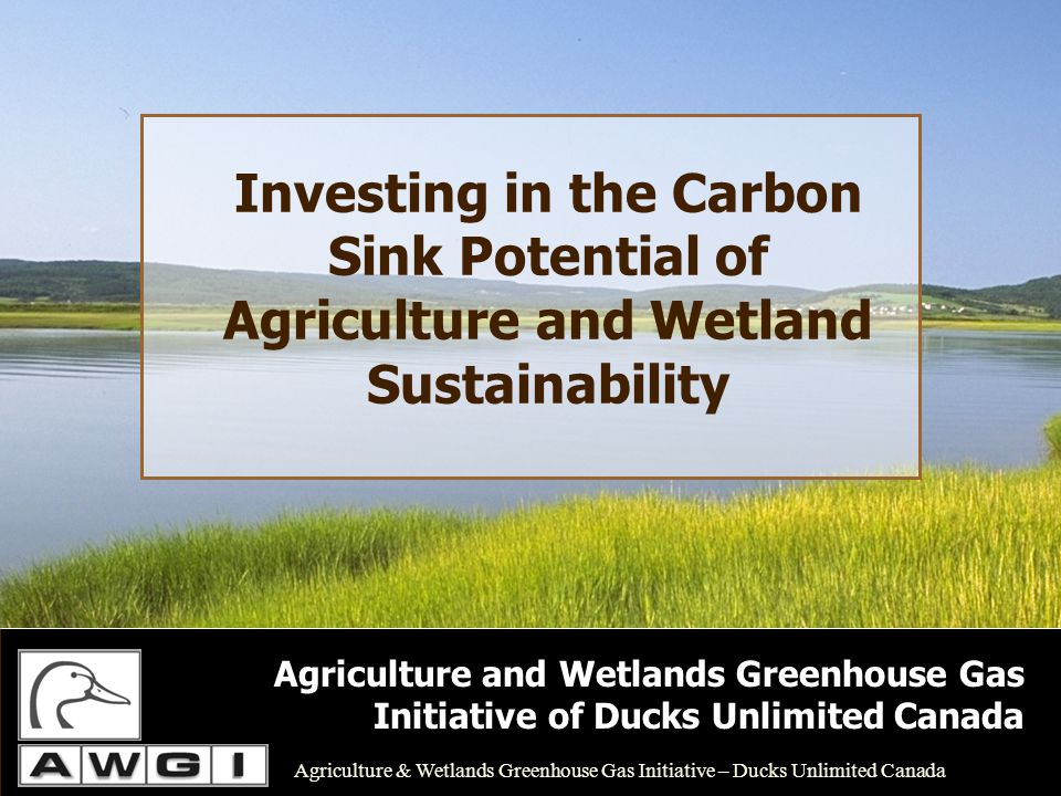 Investing in the Carbon Sink Potential of Agriculture and Wetland Sustainability Agriculture and Wetlands Greenhouse Gas Initiative of Ducks Unlimited