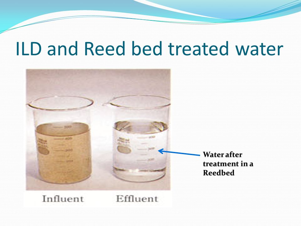ILD and Reed bed treated water