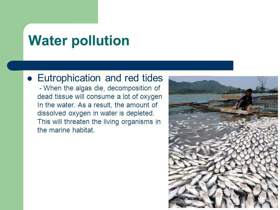 Eutrophication and red tides - When the algas die, decomposition of dead tissue will consume a lot of oxygen In the water. As a result, the amount of