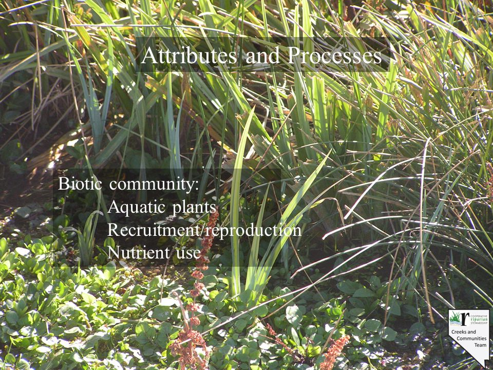 Attributes and Processes Biotic community: Aquatic plants Recruitment/reproduction Nutrient use