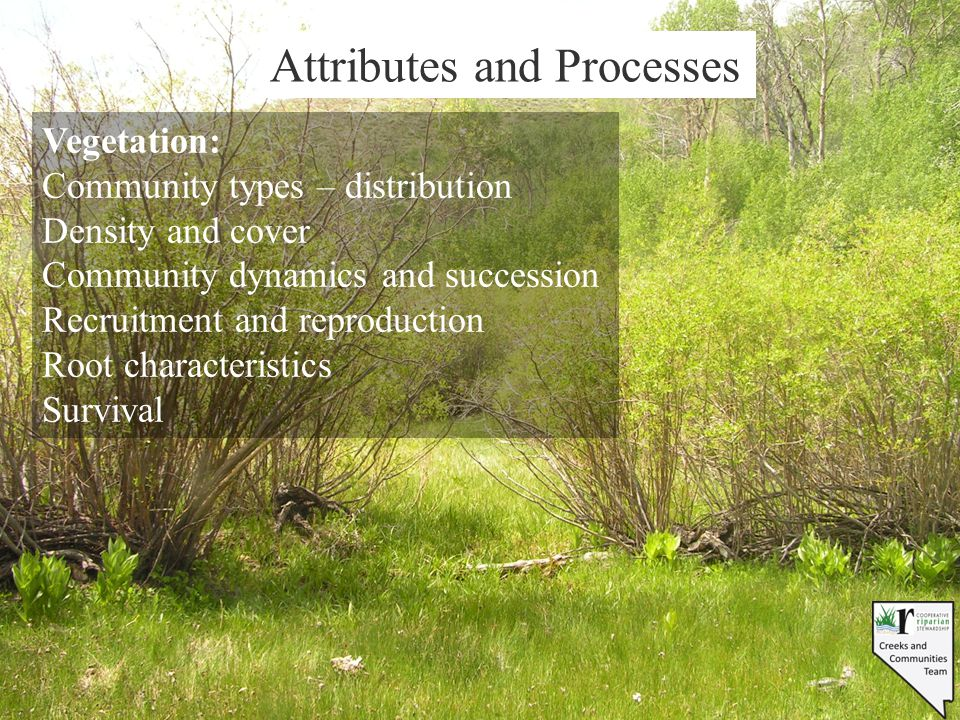 Attributes and Processes Vegetation: Community types – distribution Density and cover Community dynamics and succession Recruitment and reproduction R