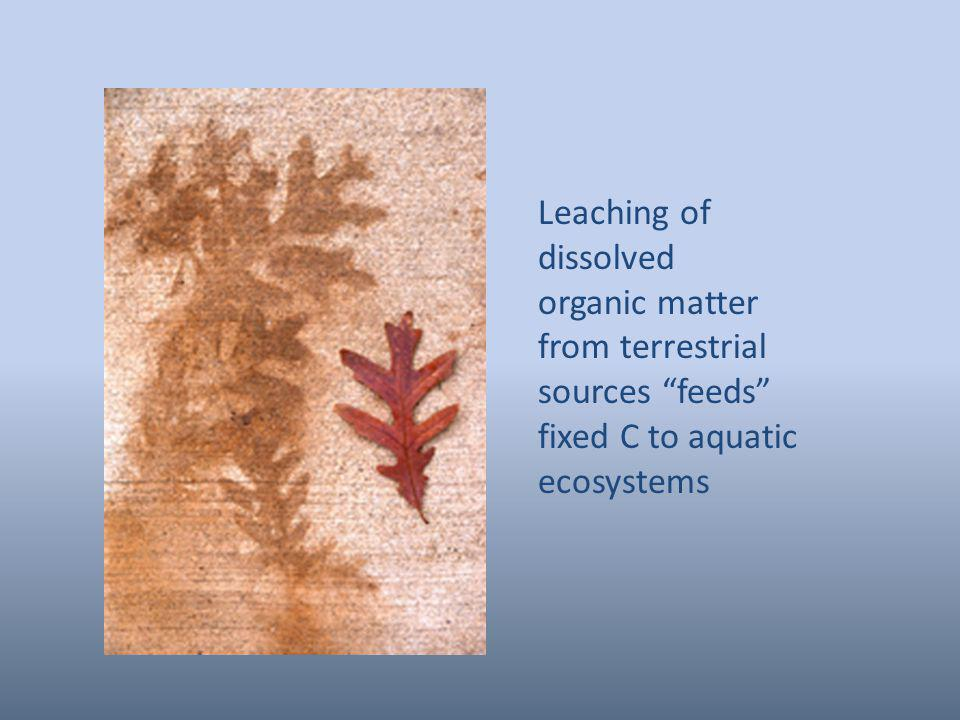 Leaching of dissolved organic matter from terrestrial sources feeds fixed C to aquatic ecosystems