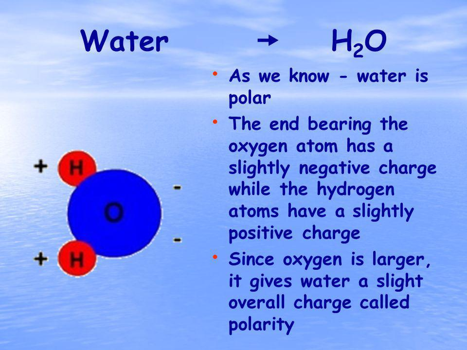 Water H 2 O As we know - water is polar The end bearing the oxygen atom has a slightly negative charge while the hydrogen atoms have a slightly positive charge Since oxygen is larger, it gives water a slight overall charge called polarity