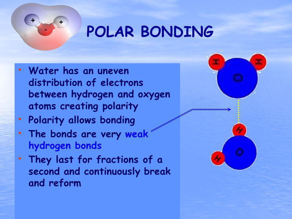 POLAR BONDING Polarity really does allow bonding They are hydrogen bonds and they are very weak They last for fractions of a second Continuously break and reform Water has an uneven distribution of electrons between hydrogen and oxygen atoms creating polarity Polarity allows bonding The bonds are very weak hydrogen bonds They last for fractions of a second and continuously break and reform + + -