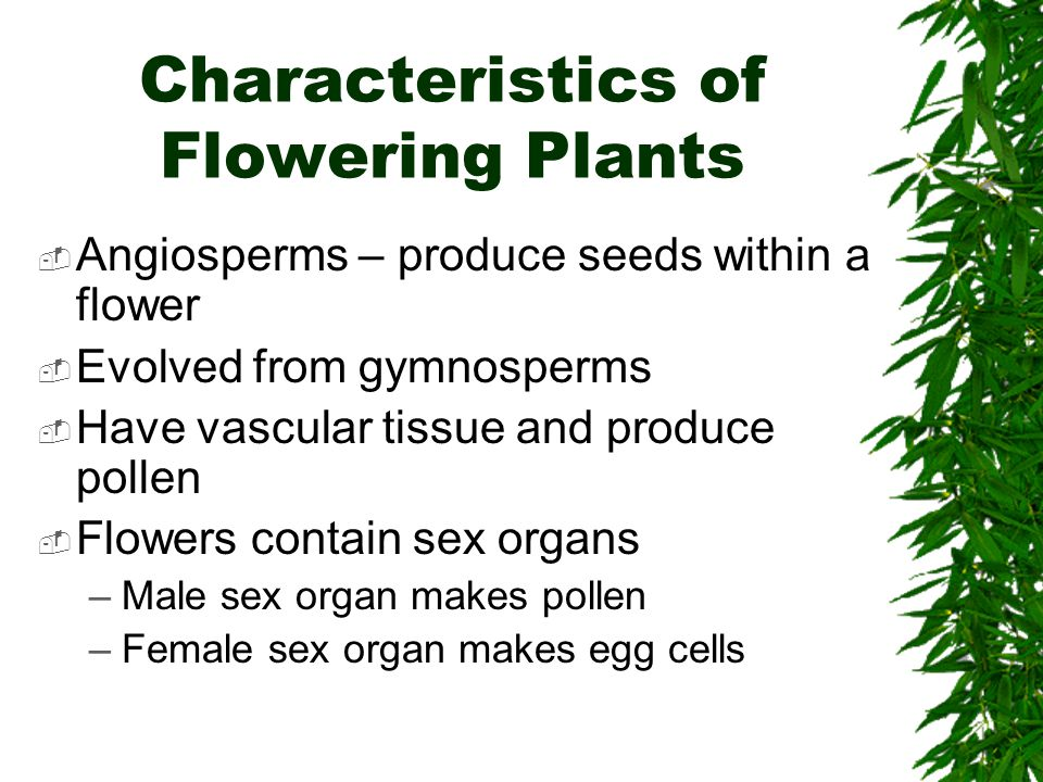 Characteristics of Flowering Plants Angiosperms – produce seeds within a flower Evolved from gymnosperms Have vascular tissue and produce pollen Flowe