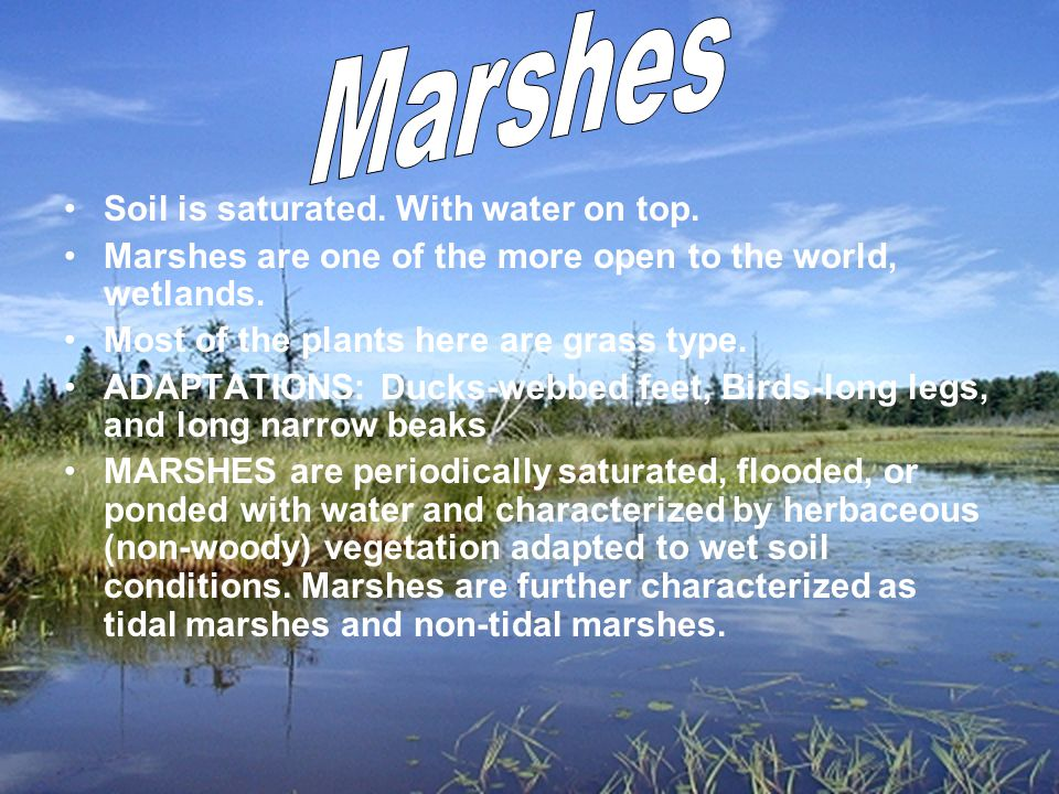 Soil is saturated. With water on top. Marshes are one of the more open to the world, wetlands.