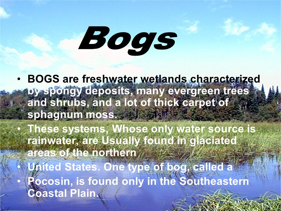 Bogs BOGS are freshwater wetlands characterized by spongy deposits, many evergreen trees and shrubs, and a lot of thick carpet of sphagnum moss.