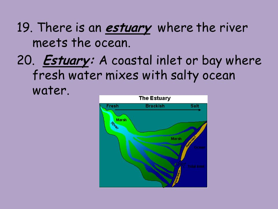 19. There is an estuary where the river meets the ocean.