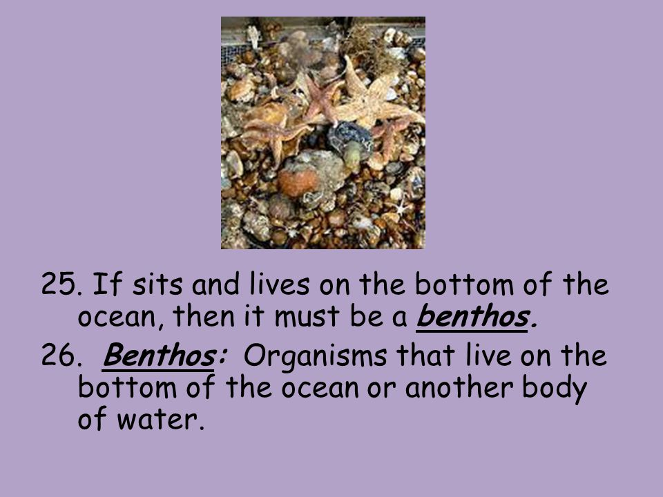 25. If sits and lives on the bottom of the ocean, then it must be a benthos.