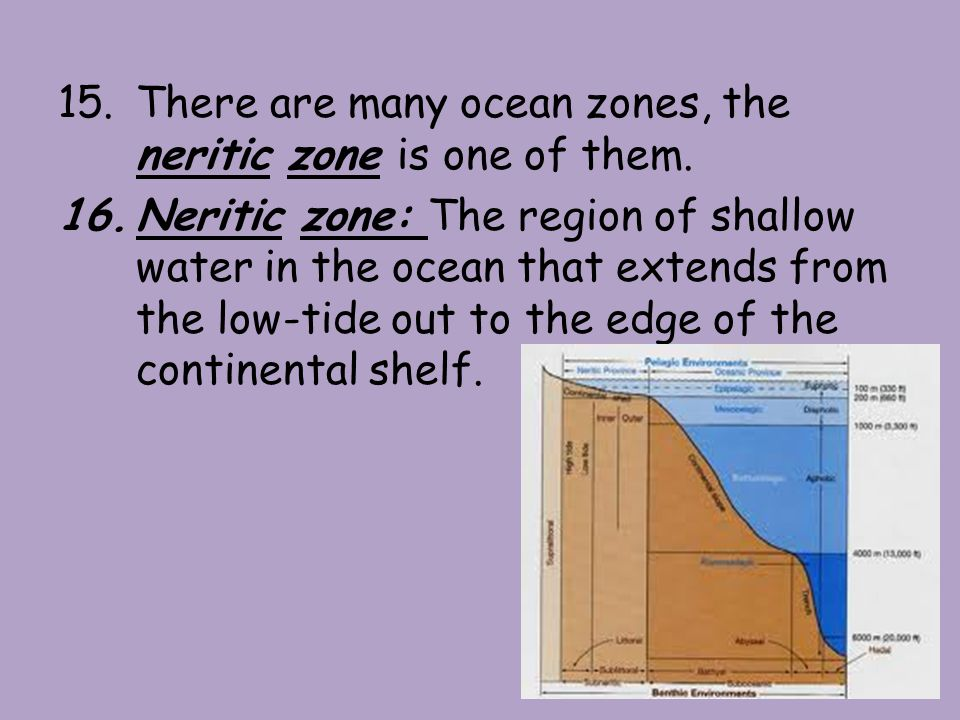 17.The open-ocean zone, is the largest zone in the ocean.