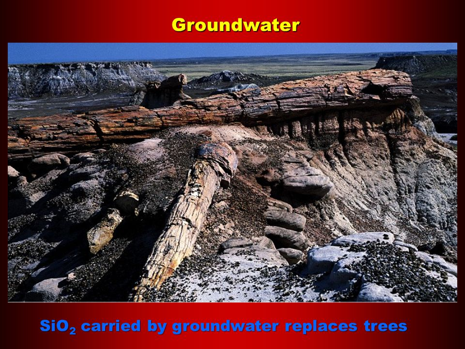 Groundwater SiO 2 carried by groundwater replaces trees