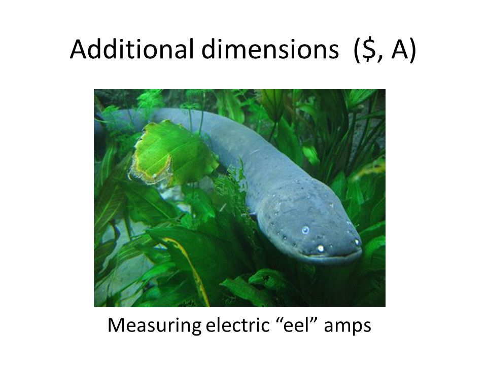Additional dimensions ($, A) Gameboard Economics Measuring electric eel amps