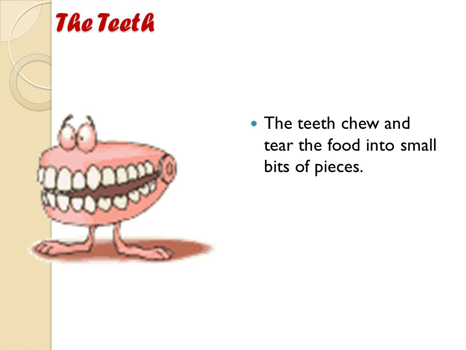 The Teeth The Teeth The teeth chew and tear the food into small bits of pieces.
