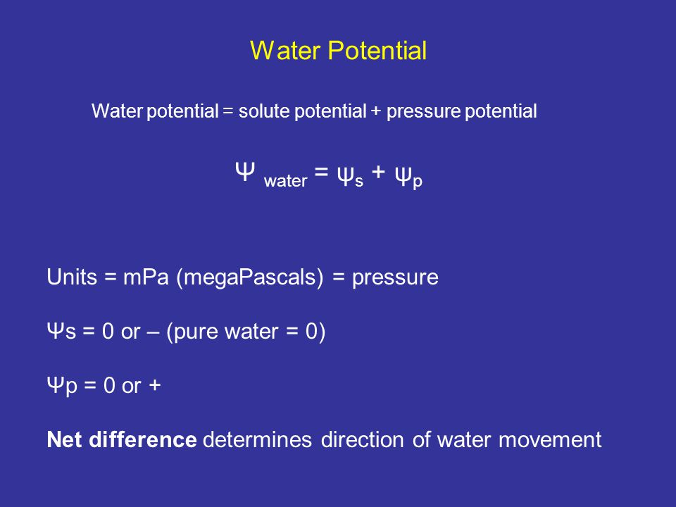 Water Potential Water potential = solute potential + pressure potential Ψ water = ψ s + ψ p Units = mPa (megaPascals) = pressure Ψs = 0 or – (pure water = 0) Ψp = 0 or + Net difference determines direction of water movement