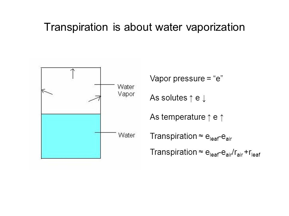 Transpiration is about water vaporization Vapor pressure = e As solutes e As temperature e Transpiration e leaf -e air Transpiration e leaf -e air /r