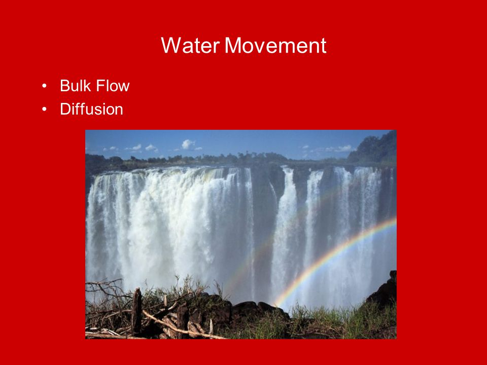 Water Movement Bulk Flow Diffusion