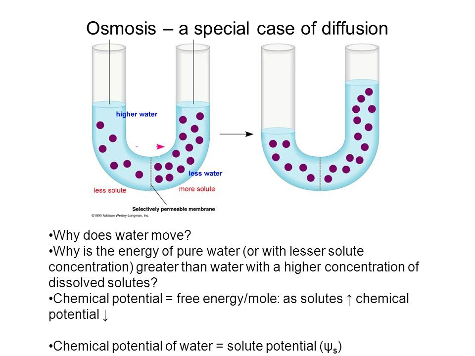 Osmosis – a special case of diffusion Why does water move? Why is the energy of pure water (or with lesser solute concentration) greater than water wi