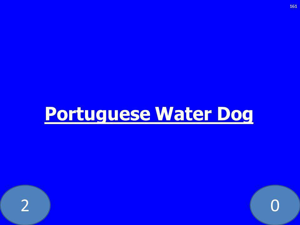 20 161 Portuguese Water Dog