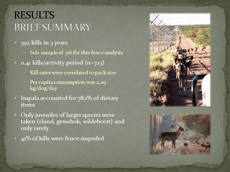 392 kills in 3 years Sub-sample of 316 for this fence analysis 0.41 kills/activity period (n=723) Kill rates were correlated to pack size Per capita consumption was 2.09 kg/dog/day Impala accounted for 78.1% of dietary items Only juveniles of larger species were taken (eland, gemsbok, wildebeest) and only rarely 41% of kills were fence-impeded