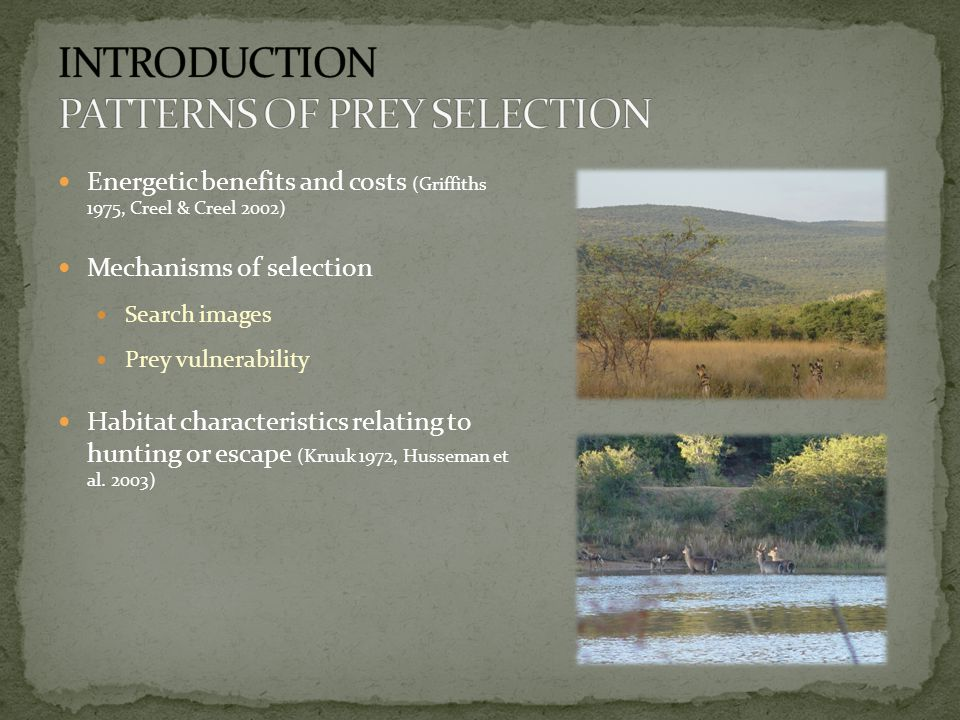 Direct observations of kills Date and time Location Species Age (tooth wear) Sex (adults and sub adults only) Femur marrow condition Visual score, % marrow fat Compare with venison hunts Estimated edible biomass Allocated size category Small <25 kg Medium 25-90 kg Large >90 kg Distance from fence line, fence- impeded or not