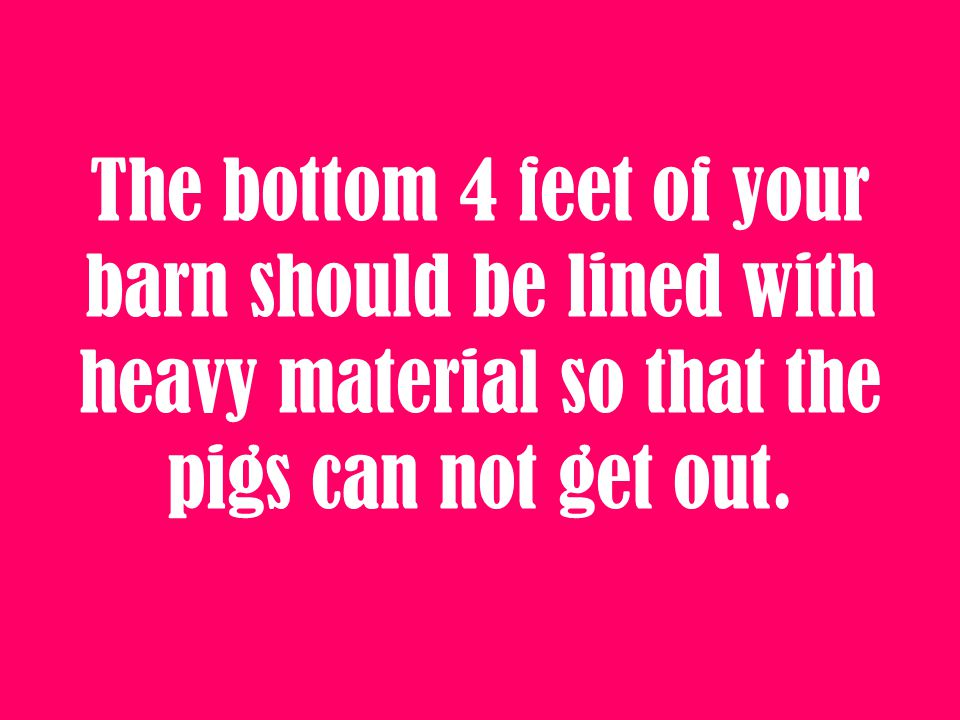 The bottom 4 feet of your barn should be lined with heavy material so that the pigs can not get out.